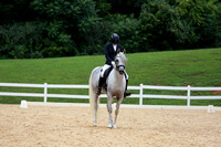 Gray Dressage No Number